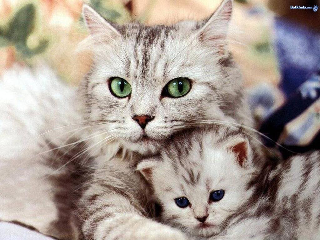 Funny Cute Cat 3 Desktop Wallpaper Funnypicture