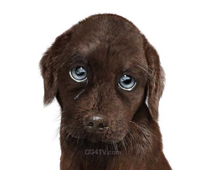 Funny Dog Animations 16 High Resolution Wallpaper