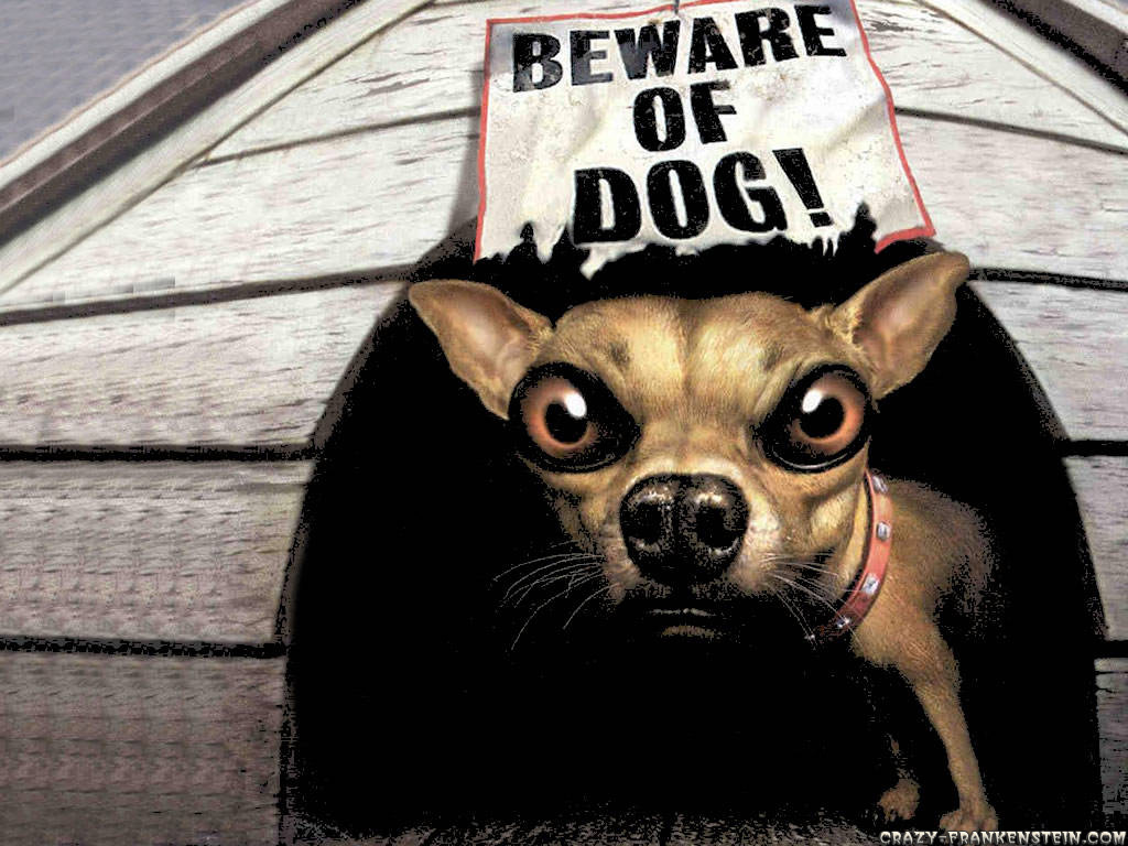 funny dog backgrounds 29 cool hd wallpaper funnypictureorg