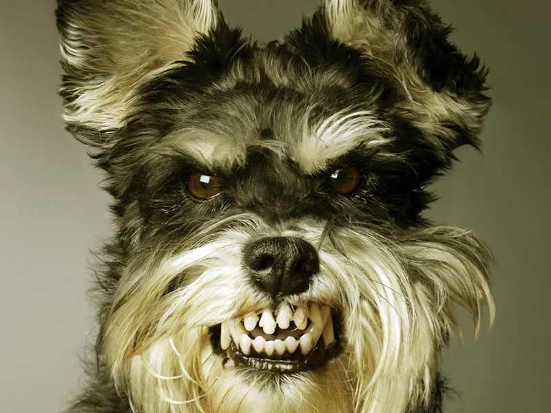 funny dog hd wallpaper - photo #22