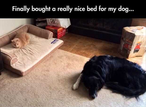 Funny Dog Bed 2 Hd Wallpaper