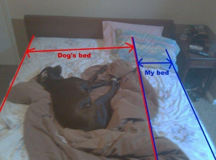 Funny Dog Bed 29 Hd Wallpaper