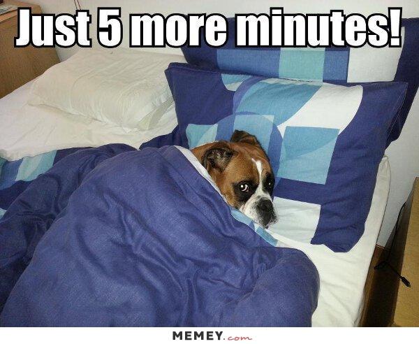 Lazy Dog Bed