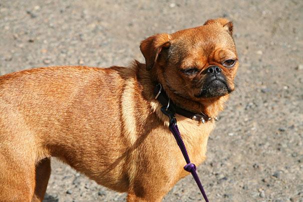Funny Dog Breed Mixes