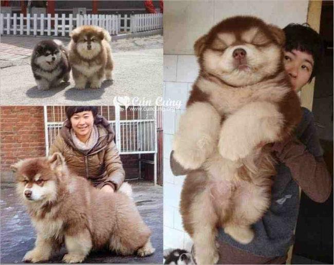 Funny Dog Breed Mixes 40 Hd Wallpaper