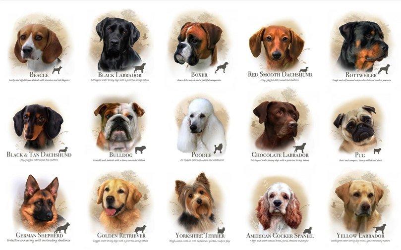 Funny Dog Breed Names 22 Desktop