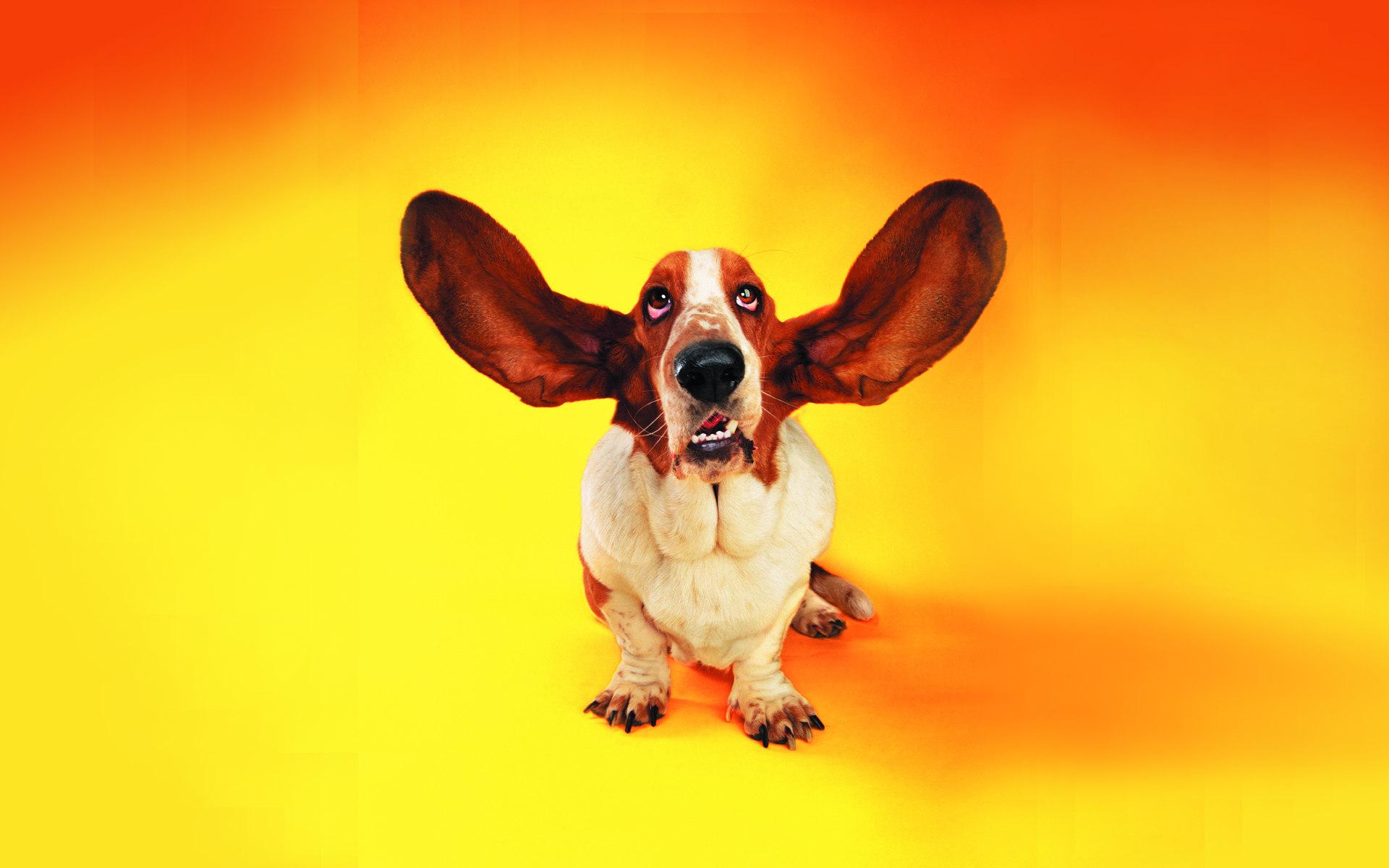 funny dog hd wallpaper - photo #6