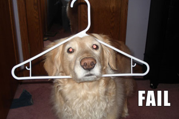 Funny Dog Fails 17 High Resolution Wallpaper