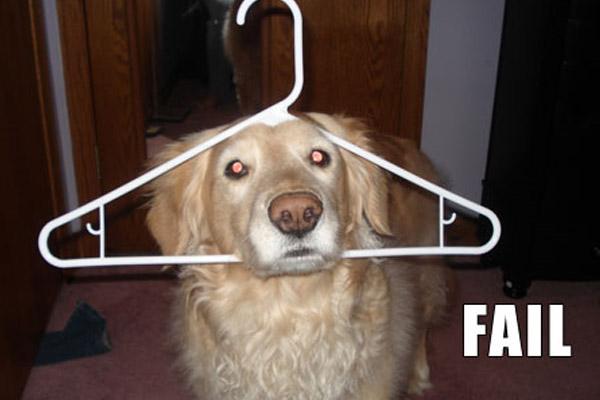 Funny Dog Fails 17 High Resolution Wallpaper