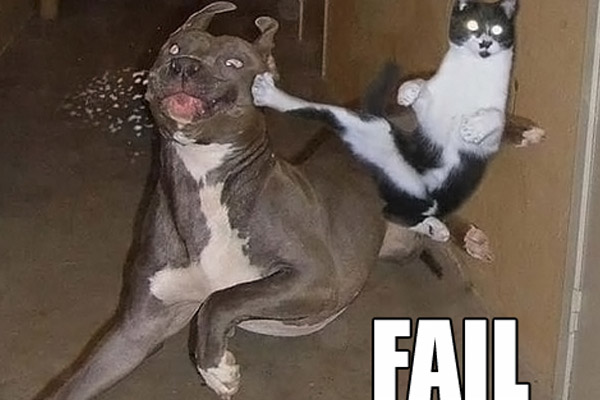 Funny Dog Fails 2 Desktop Wallpaper