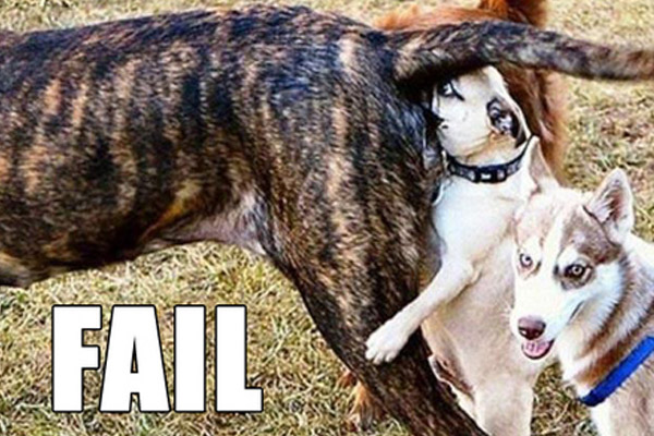 Funny Dog Fails 20 Desktop Background