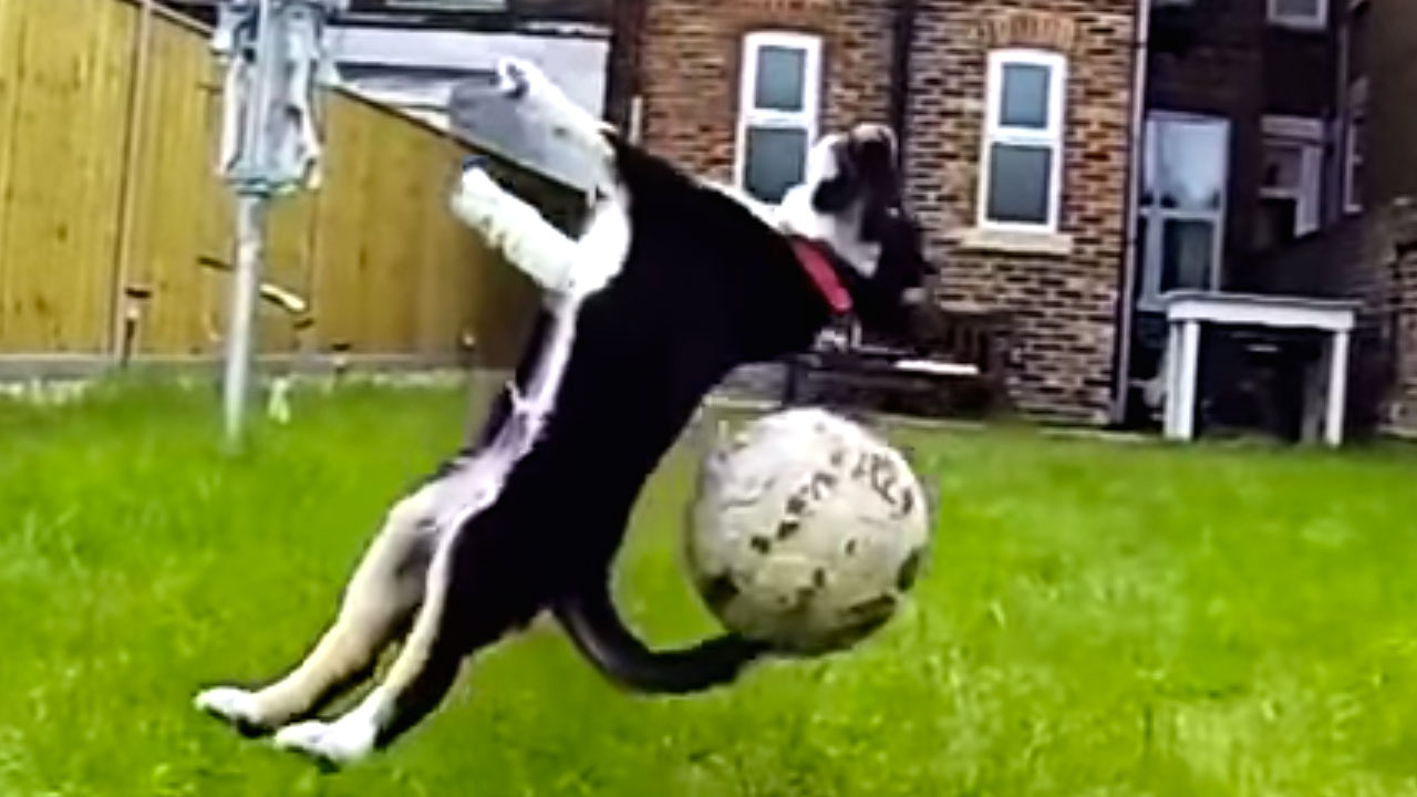 funny dog fails 22 background funny dog fails 22 background funnypicture org