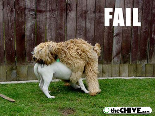 Funny Dog Fails 26 Widescreen Wallpaper