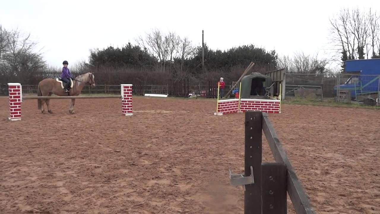 Funny Horse Fails 27 Free Hd Wallpaper