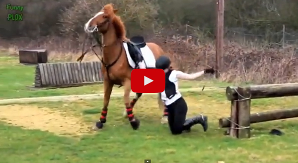 Funny Horse Fails 6 Cool Hd Wallpaper