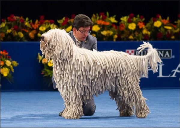 Funny Odd Dog Breeds 23 Wide Wallpaper