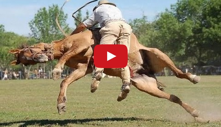 Horse Bloopers Funny 17 Widescreen Wallpaper ...