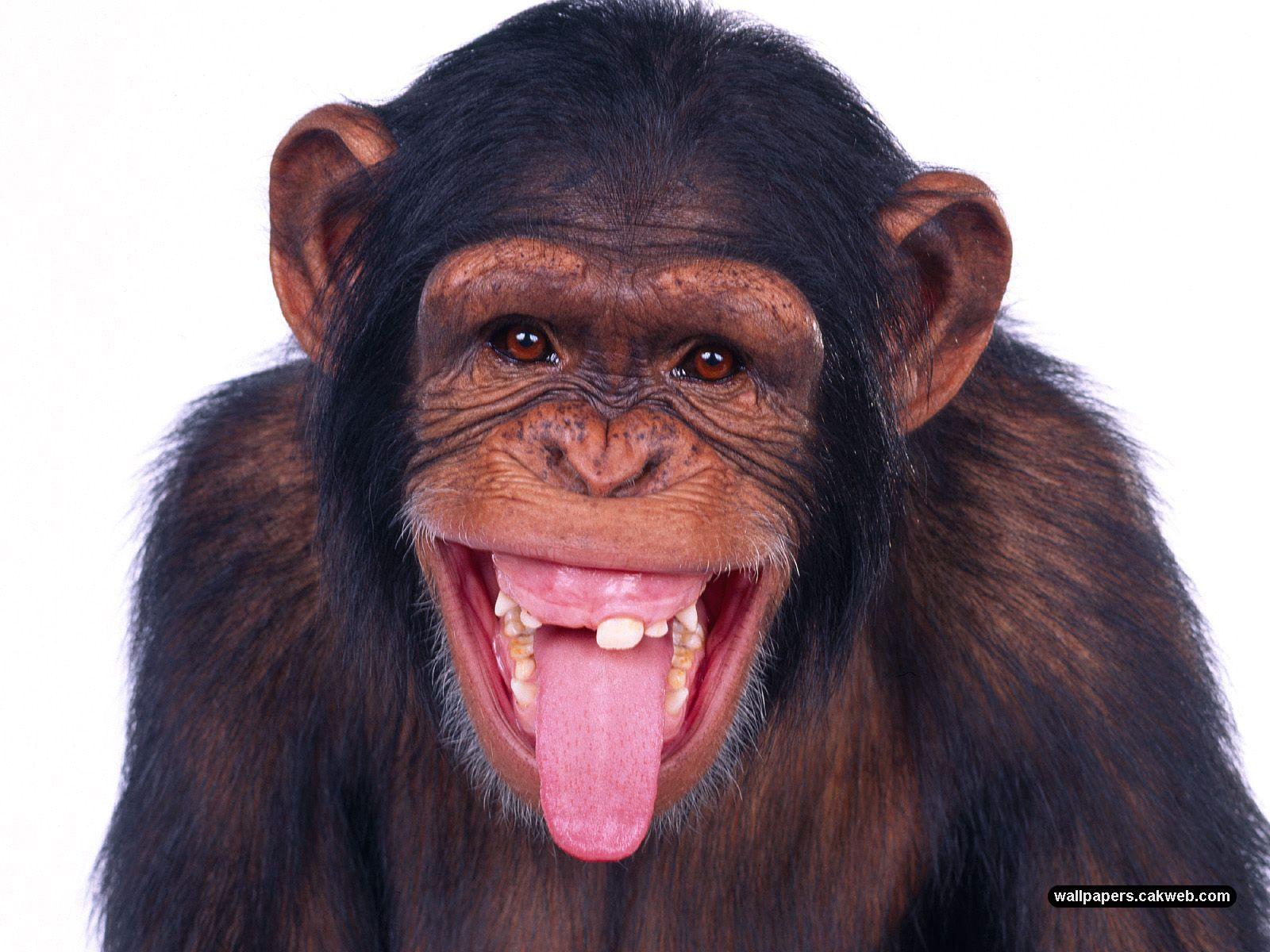 Funny Animals 577 Free Wallpaper