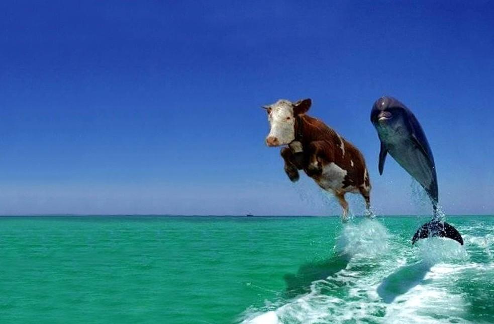 Funny Animals 584 Desktop Background