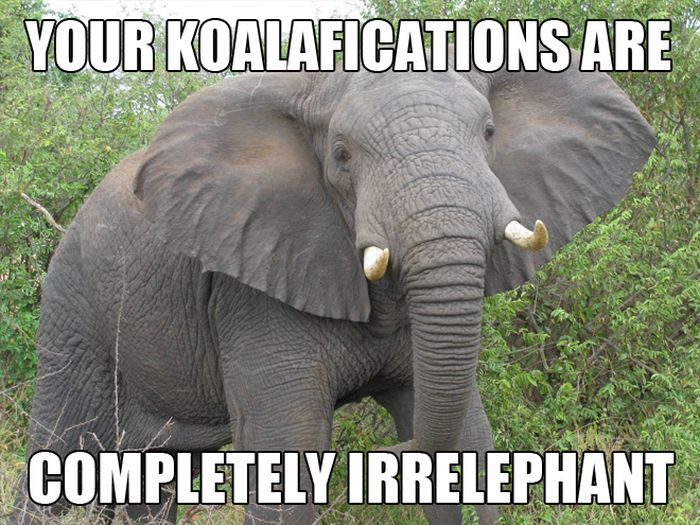Funny Memes 43 High Resolution Wallpaper
