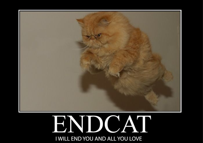 Lolcats 80 Free Hd Wallpaper