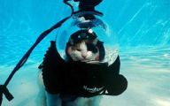 Extreme Funny Cats 29 High Resolution Wallpaper