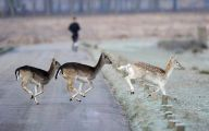 Funny African Animals 11 Cool Hd Wallpaper