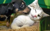 Funny And Cute Animals 37 Hd Wallpaper