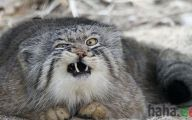 Funny Angry Cats 4 Wide Wallpaper