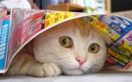 Funny Cats Being Scared 23 Cool Hd Wallpaper