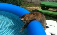 Funny Cats In Water  25 Hd Wallpaper