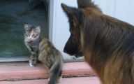 Funny Dogs And Cats Living Together 21 Desktop Wallpaper