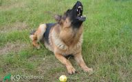 Funny Dogs Barking 26 Background