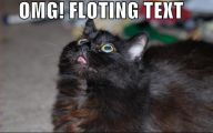 Funny Black Cat Pictures 16 Cool Wallpaper