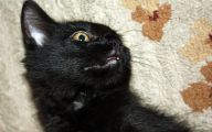 Funny Black Cat Pictures 35 Desktop Wallpaper