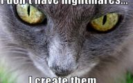 Very Funny Cat Photos 12 Desktop Background