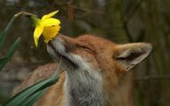 Funny Animals Eating 16 Cool Wallpaper