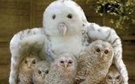 Funny Animals Pics 15 Free Wallpaper