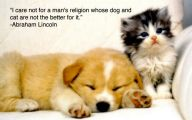 Funny Animals With Quotes 24 High Resolution Wallpaper