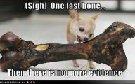 Funny Bones For Dogs 21 Cool Hd Wallpaper