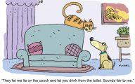 Funny Cartoon Cat Pictures 6 Wide Wallpaper
