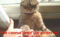 Funny Cat Blog 25 Free Wallpaper