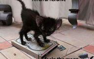 Funny Cat Blog 37 Cool Wallpaper