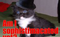 Funny Cat Blog 6 Background Wallpaper