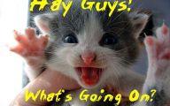 Funny Cat Blog 7 Free Hd Wallpaper