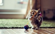Funny Cat Playing 39 Desktop Wallpaper