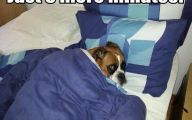 Funny Dog Bed 8 Cool Hd Wallpaper