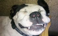 Funny Dog Breed Mixes 28 High Resolution Wallpaper