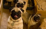 Funny Dog Clips Download 14 Background