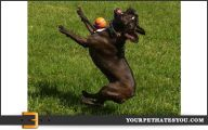 Funny Dog Fails 37 Cool Hd Wallpaper